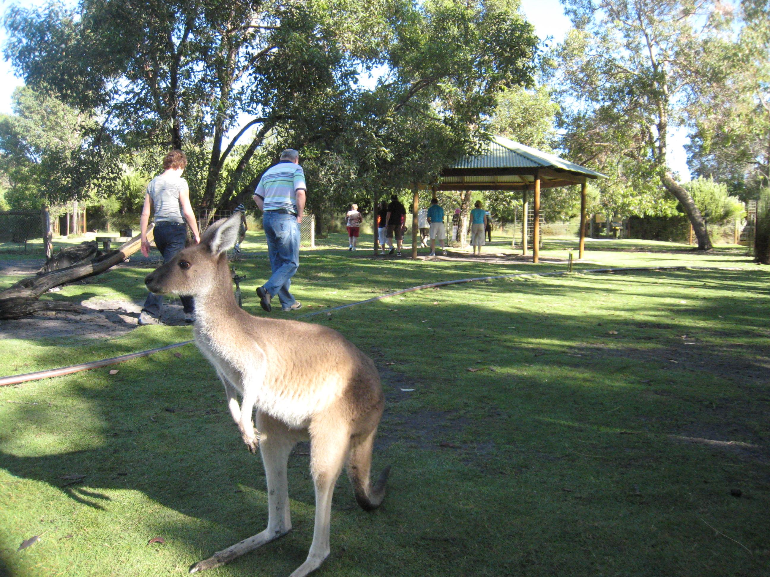 Australija 018